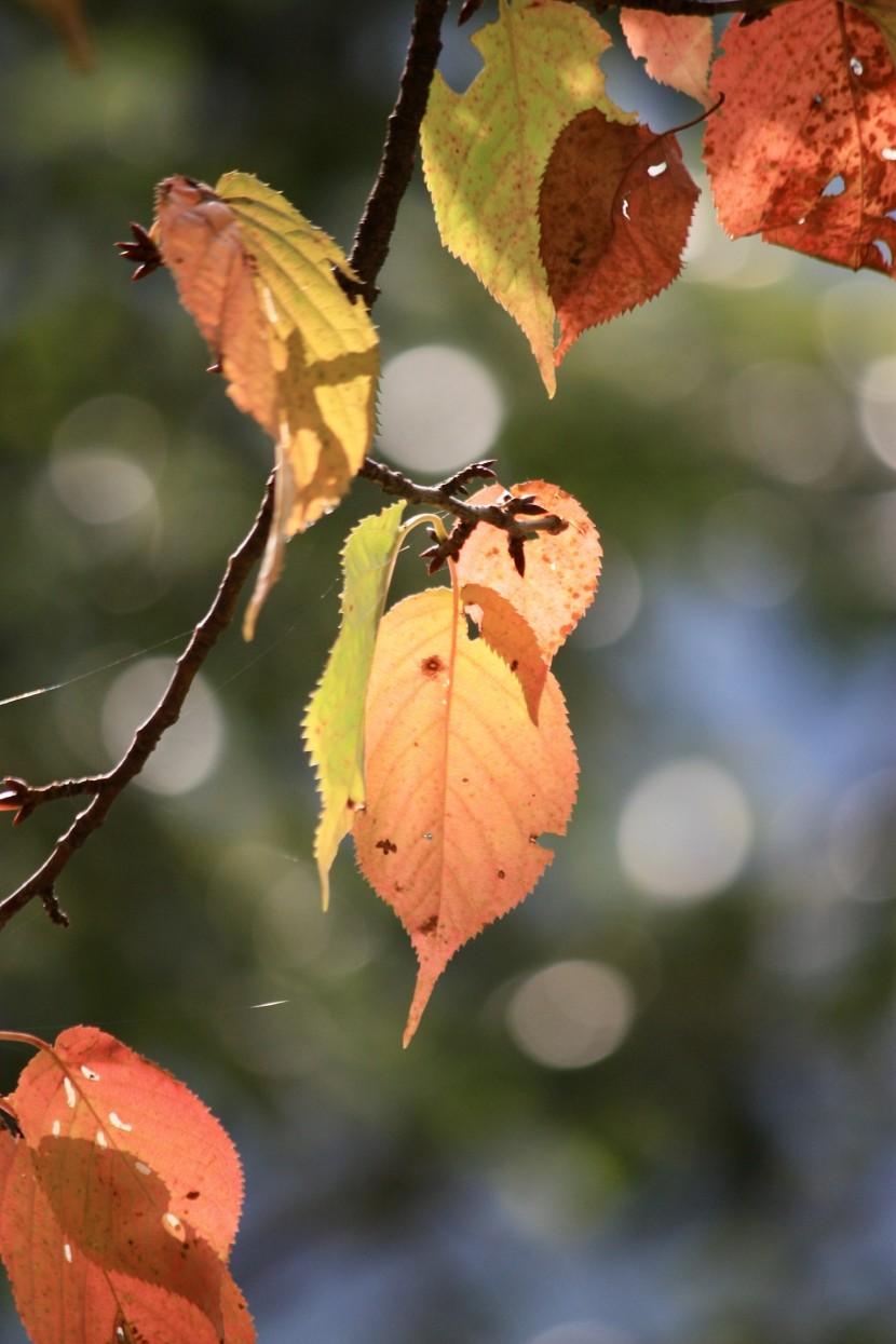 信州フォトダイアリー【秋の気配】